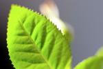 FLOW2005-Rozenblaadje 2_MG_6441 - versie 2