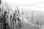NATU2003-Elementen  in zwart:wit - versie 2