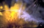 ONKR2004-Sperms 2_1 - versie 2