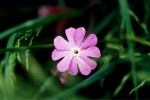 ONKR2004-Onkruid-Wildflower - versie 2