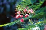 FLOW2001-Gewoon blommeke