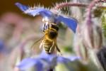 ANIM2007-BEE FROM THE BACK-VX8P0506 - versie 2