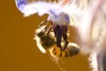 ANIM2007-BEE BACKLIGHT-VX8P0514 - versie 2