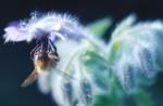 ANIM2003-Bee in blue  - versie 2