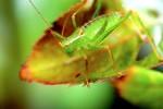 ANIM2005-GREEN ON GREEN_X8P9691 - versie 2
