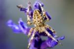 ANIM2005-SPIDERMAN_MG_9045 - versie 2