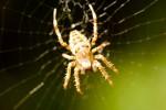 ANIM2005-SPIDER CLOSE_X8P9841 - versie 2