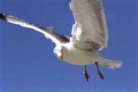 BIRD2003-Jonathan straight