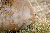 BIRD2005-HIDING FOR A NASTY INVIROMENT_X8P0436