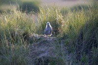 BIRD2005-BRANDNEW SEAGUL_X8P0491