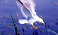 BIRD2003-Johnathan Attack