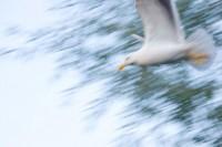 BIRD2005-JONATHAN AT MACH ONE_X8P9658