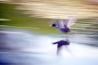 BIRD2005-SPEED OF LIGHT_X8P0495