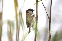 BIRD2005-CATCH_X8P0933