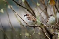 BIRD2005-DUO_X8P0934