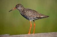BIRD2006-TURELUUR-VX8P2030