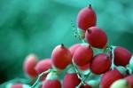 FRUI2002-Beautiful red nuts - versie 3