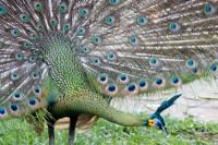 BIRD2006-PAUW 2-VX8P2965