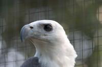 BIRD2006-EAGLE 2-VX8P3000