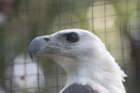 BIRD2006-EAGLE-VX8P3001