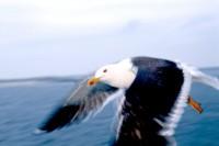 BIRD2003-Sjonny knocks on the door