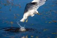 BIRD2008-MEEUW 6-VX8P3144