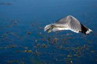 BIRD2008-MEEUW 8-VX8P3165