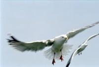 BIRD2002-Perfect formaion