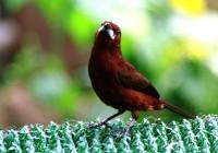 BIRD2000-Love bird