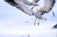 BIRD2003-Johnathan Knock knock
