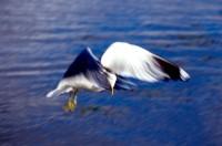 BIRD2004-John-hoover 2