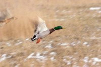 BIRD2005-Let's go_MG_6253