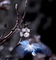 BIRD2005-take-of