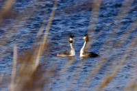 BIRD2005--BALSENDE FUTEN_MG_6763