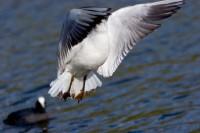 BIRD2005--GET AWAY_MG_7058