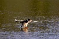 BIRD2005-FINAL APPROACH_MG_7118