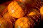FRUI2005-Fruit-Beterschap VX8P3621 - versie 3