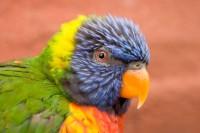 BIRD2005-BAO 2_X8P8373