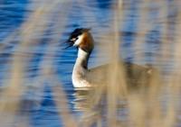 BIRD2005--FUUT ACHTER GORDIJN_MG_7413