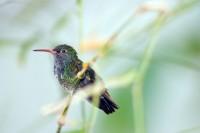 BIRD2005-PORTR-SJONNY ILLUMINATED_MG_7933