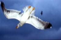 BIRD2004-Sjonny...catch
