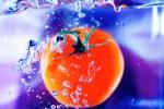 FRUI2005-Happy Tomato_X8P6382 - versie 3