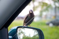 BIRD2005-SOMEBODY HOME_X8P9257