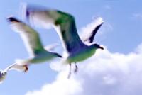 BIRD2004-Sjonny Faster than the eagl