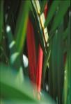 FLOW2003-Rode bamboe 2