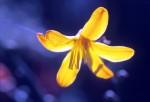 FLOW2003-Yellow compo