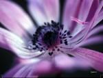 FLOW2004-It's Purple(30x40)