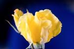FLOW2005-ROOSJE_X8P9976