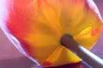FLOW2005-Innerlight 2_MG_7661