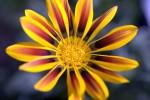 FLOW2005-JUNGLE FLOWER_X8P9022